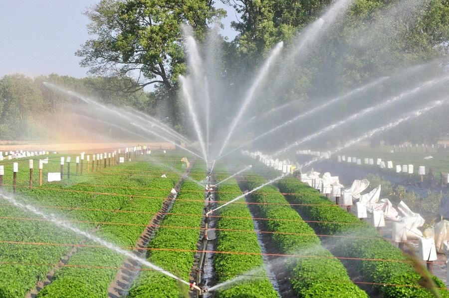 Us Micro Irrigation System Market Us Irrigation Scenario