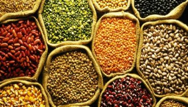 US Seed Market Outlook Remains Challenging with Decline in Crop Receipts and Consolidation in Incumbent Crops Category: Ken Research