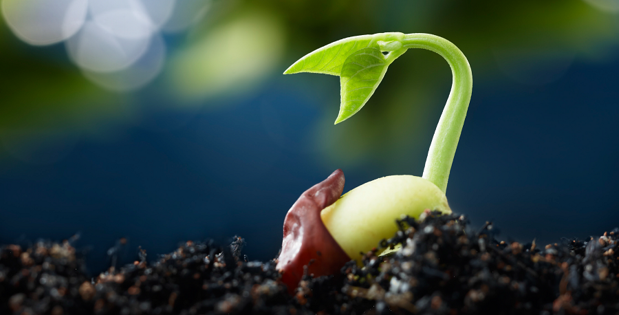 Vegetable Seeds Market in France, Import and Export of Seed, Swot