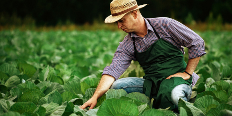 Future-Outlook-of-Poland-Crop-Protection-Market.jpg