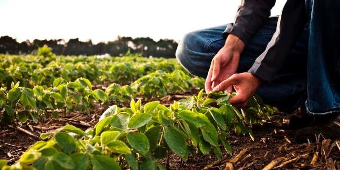 Poland-Crop-Protection-Market.jpg