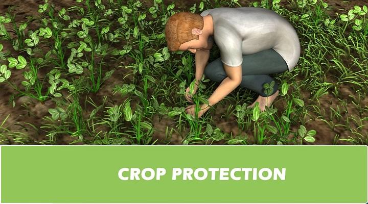 Global-Crop-Protection-Market.jpg
