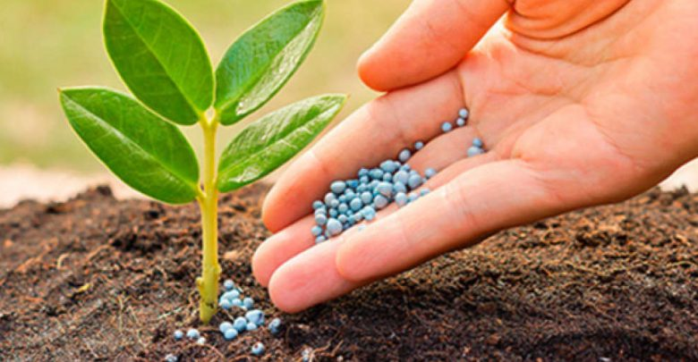 Global-Agricultural-Micronutrients-Market.jpg