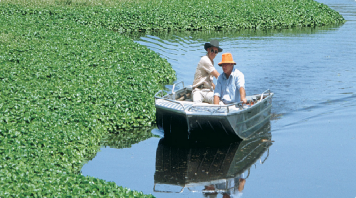 Global-Aquatic-Herbicides-market.png