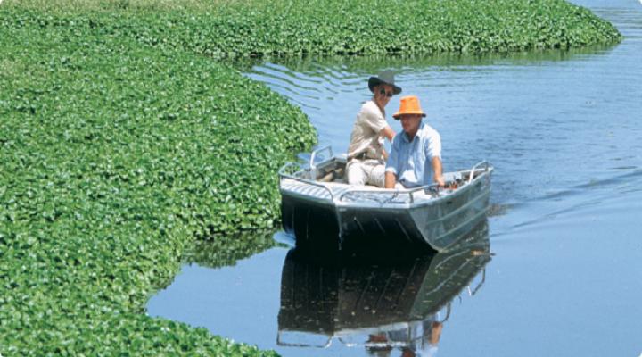Global Aquatic Herbicides market