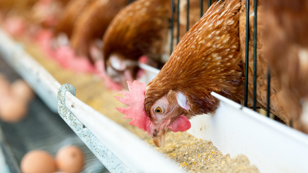 Global-Poultry-Feed-Market.png