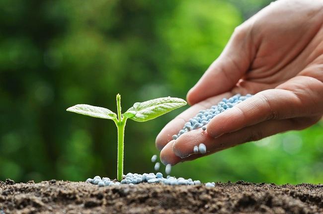 Vietnam-Fertilizer-Market.jpg