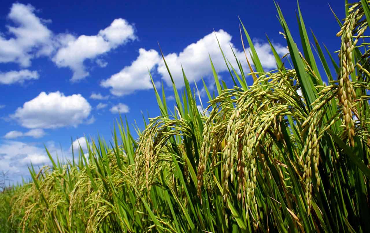 Agrochemicals-Market.jpg