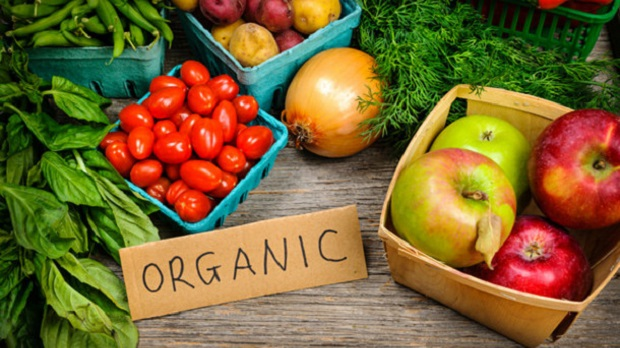 Global-Organic-Vegetable-Farming-Market.jpg