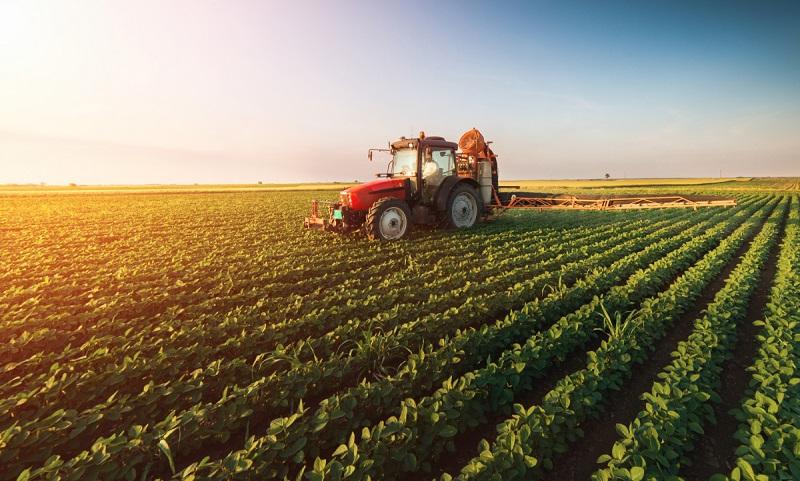Croatia-Agriculture-Market.jpg