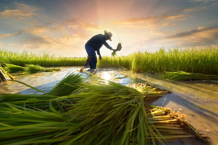 Sri-Lanka-Agriculture-Market.jpg