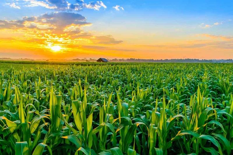 Sweden-Agriculture-Market.jpg