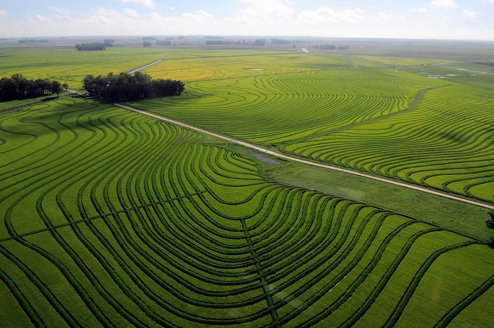 Uruguay-Agriculture-Market.jpg
