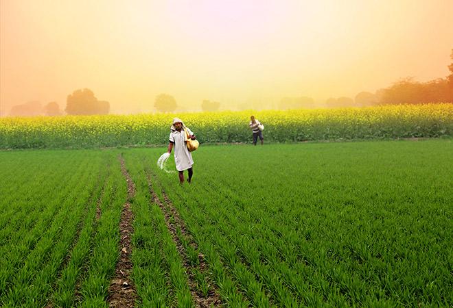 Brazil-Agriculture-Market.jpg