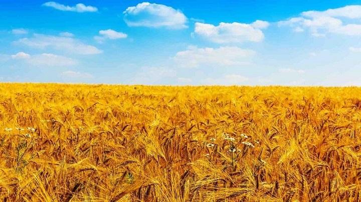 Ireland-Agriculture-Market.jpg