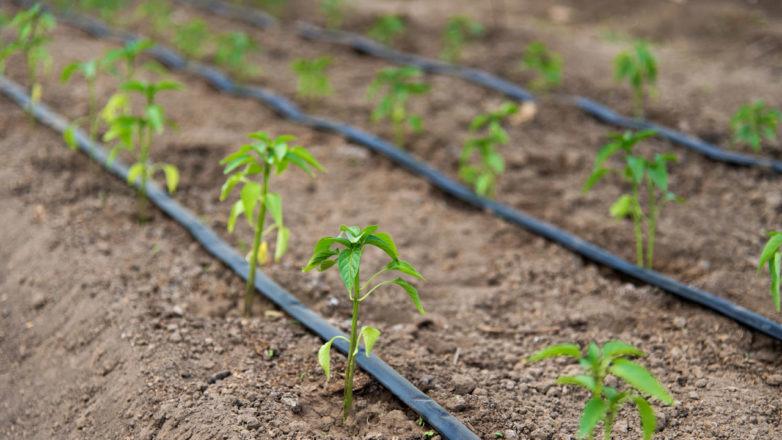 Drip-Irrigation-Market.jpg