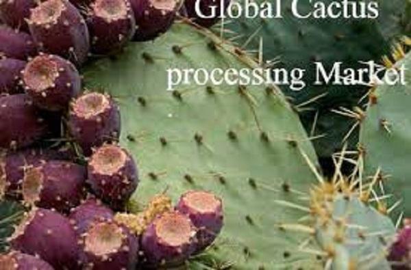 Global Cactus Processing Market