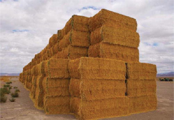 Global-Wheat-Straw-Pulp-Market.png